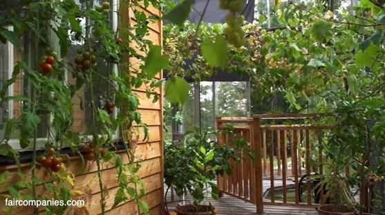 greenhouse_11_sm.jpg rogné