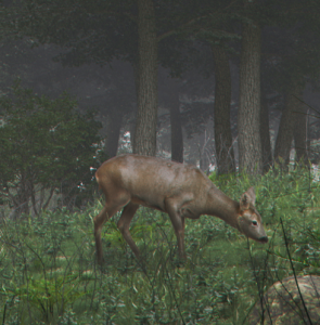 zoom.png bambi rogné